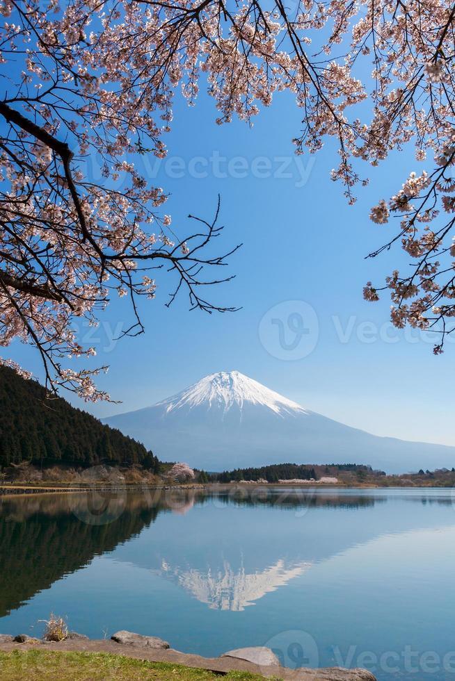 Beautiful Mt. Fuji and Cherry blossom from a Tanukiko lake(Cherry blossom) photo