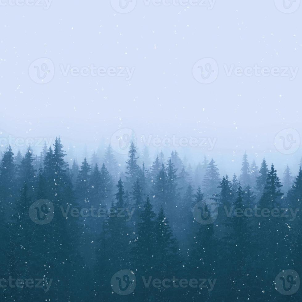 Winter pine forest with snow photo