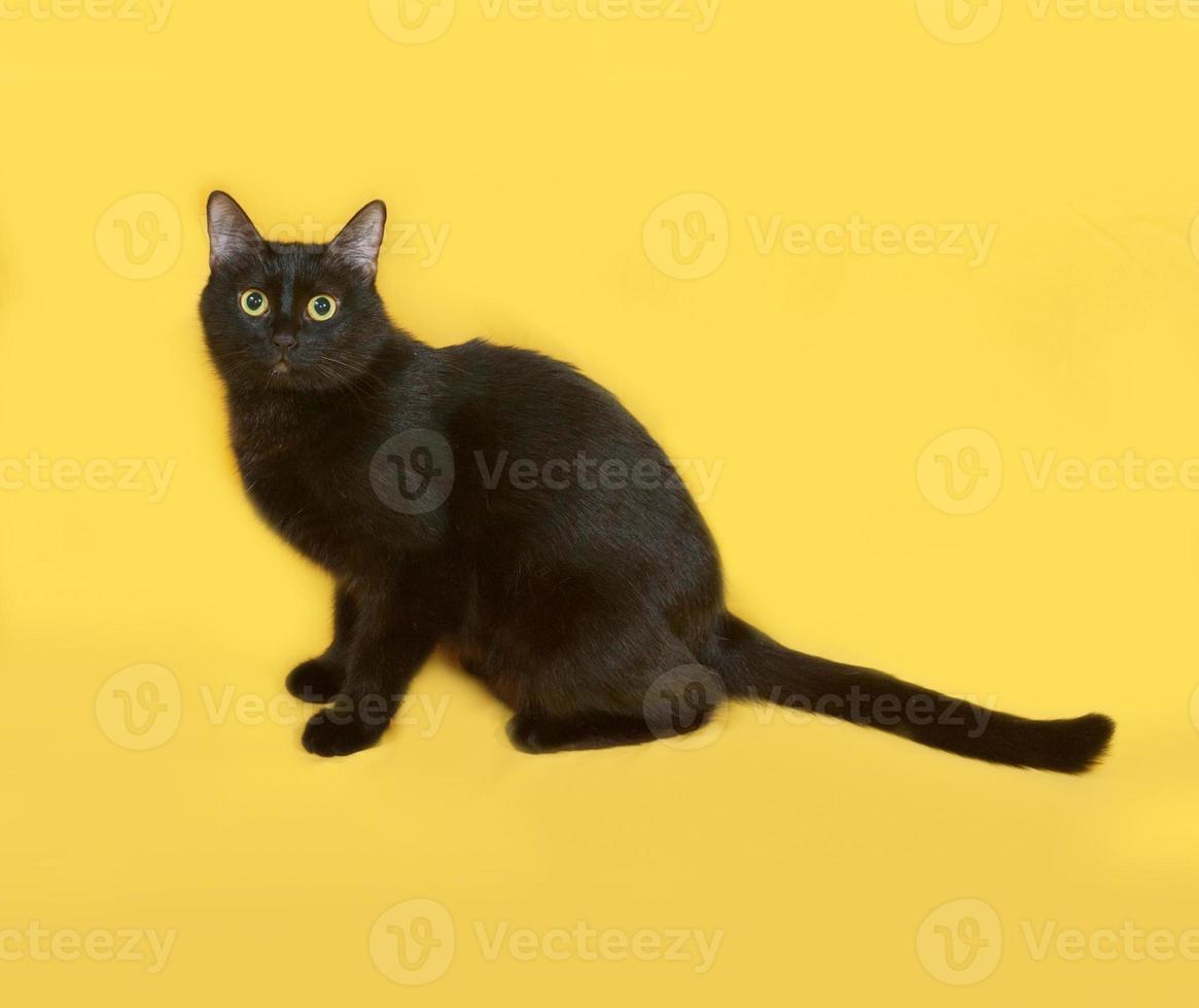 Black cat sitting on yellow photo