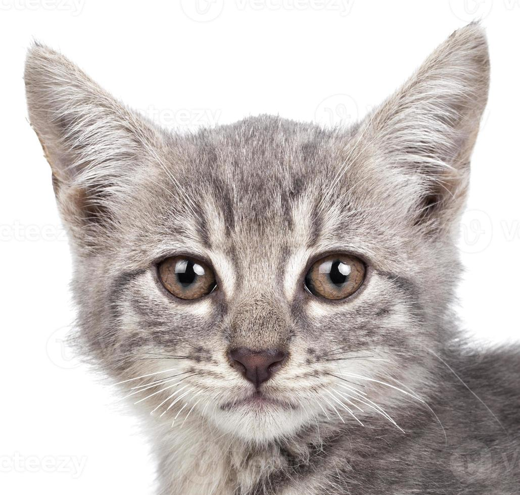 pequeño gatito foto