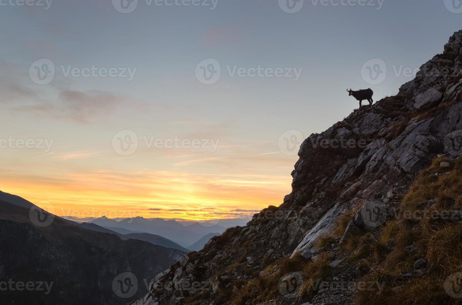 silueta de gamuza en las montañas. foto