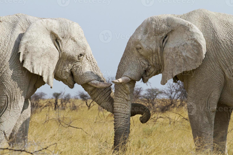elefante tiernamente foto