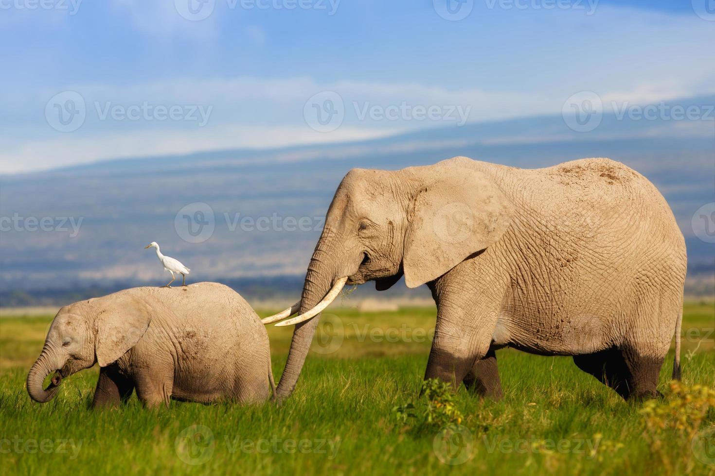 madre de elefante africano con su cría en el pantano foto