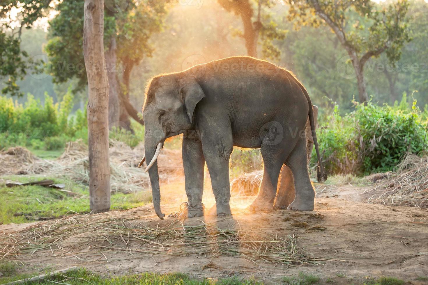 Granja de elefantes cerca del parque nacional de Chitwan en Nepal foto
