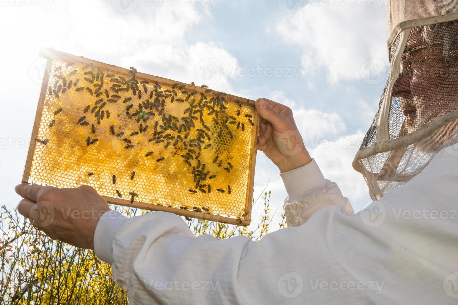apicultor sostiene el panal de una colmena contra el sol foto