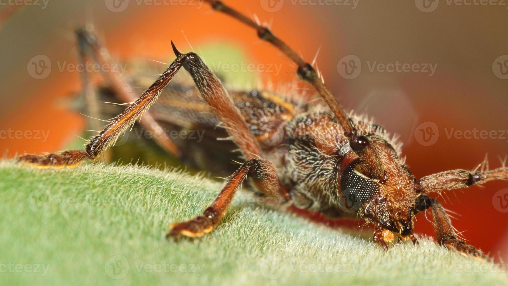 escarabajo colorido foto