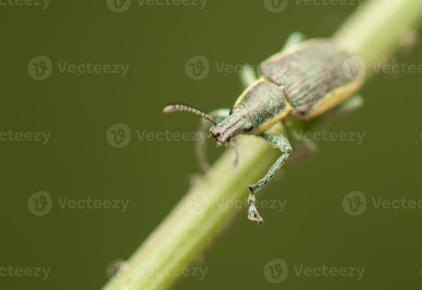 insecto escarabajo foto