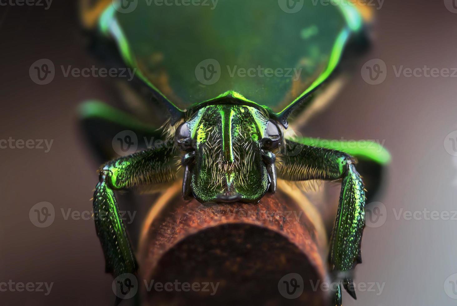 escarabajo verde foto