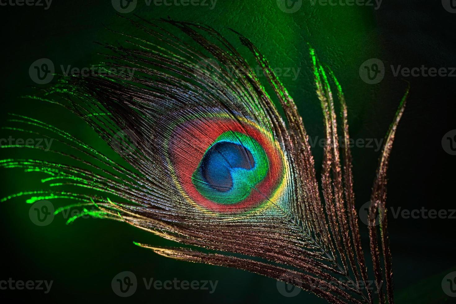 pluma de pavo real foto