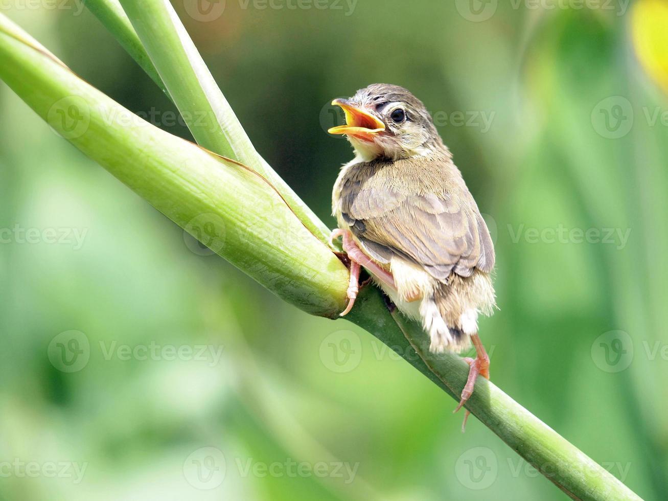 Close up view of nice little bird photo