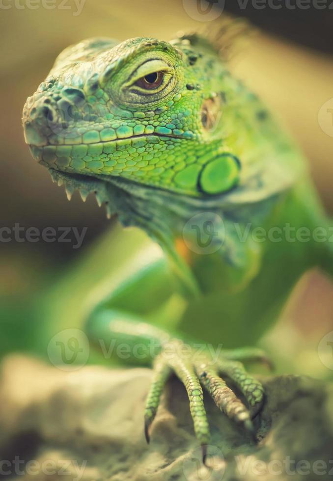 Reptile photo