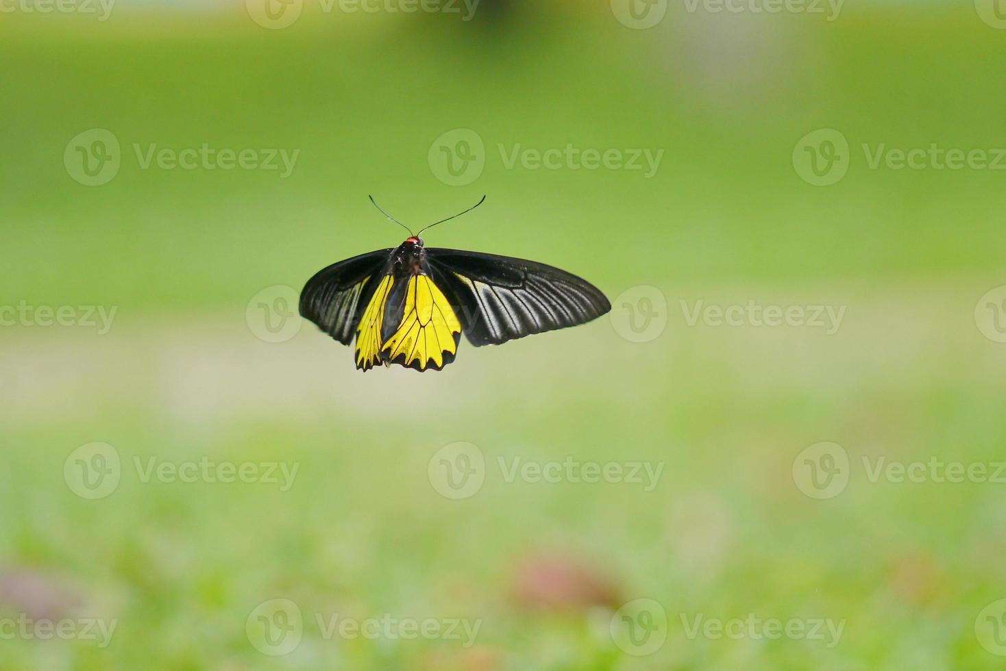 mariposa no.5 foto