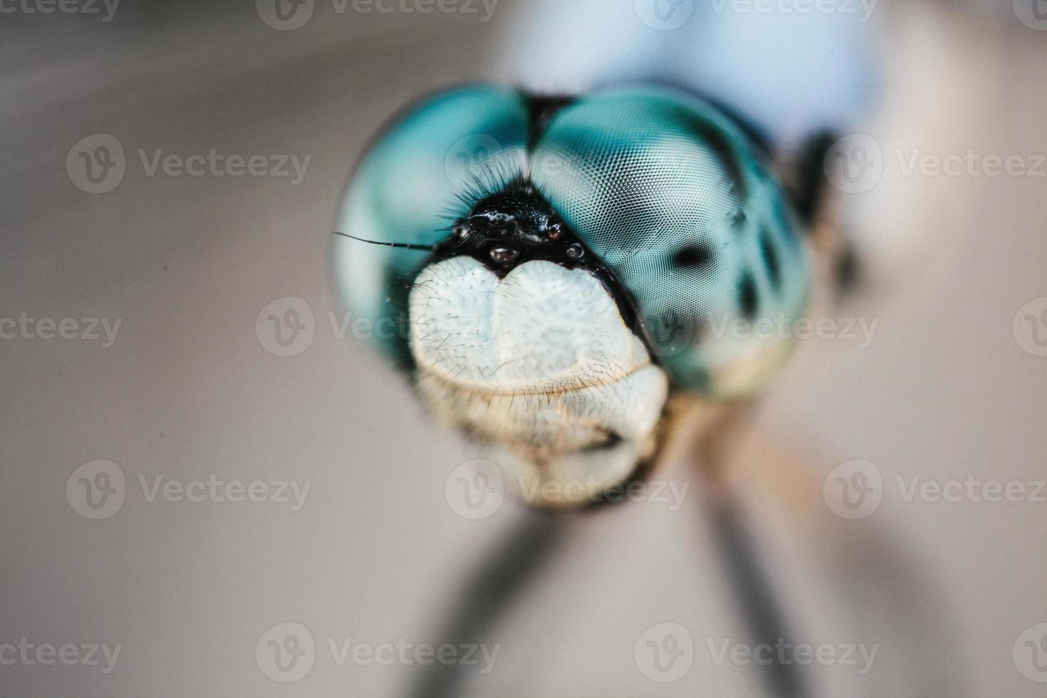 ojos de libélula de cerca foto