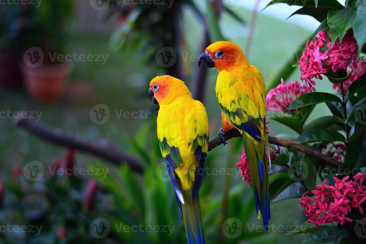 Parrots image photo