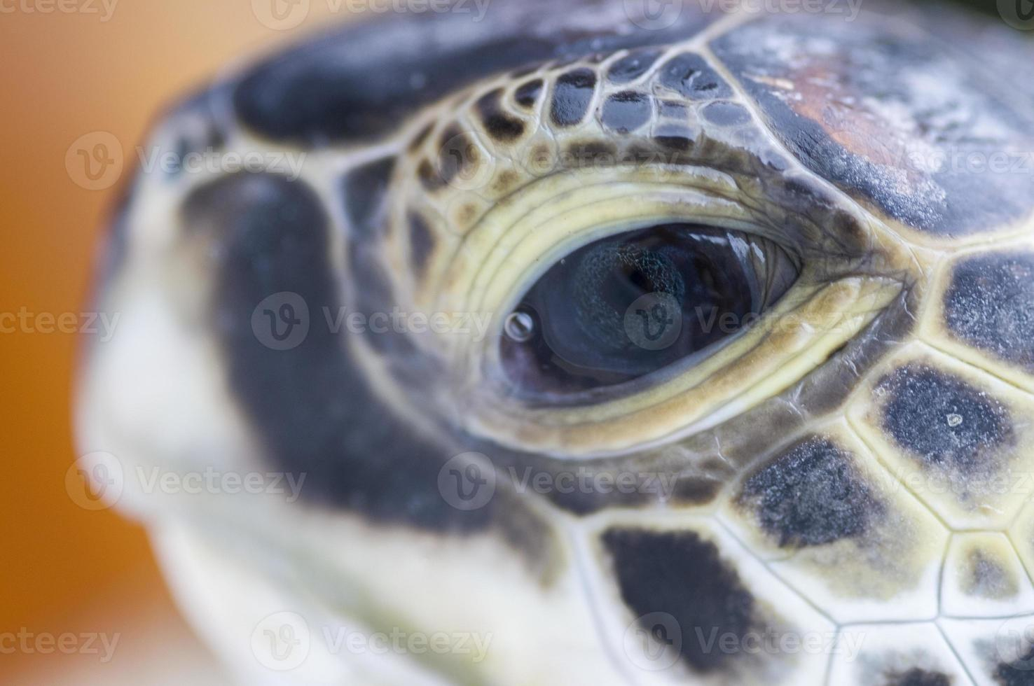 Tortue verte photo