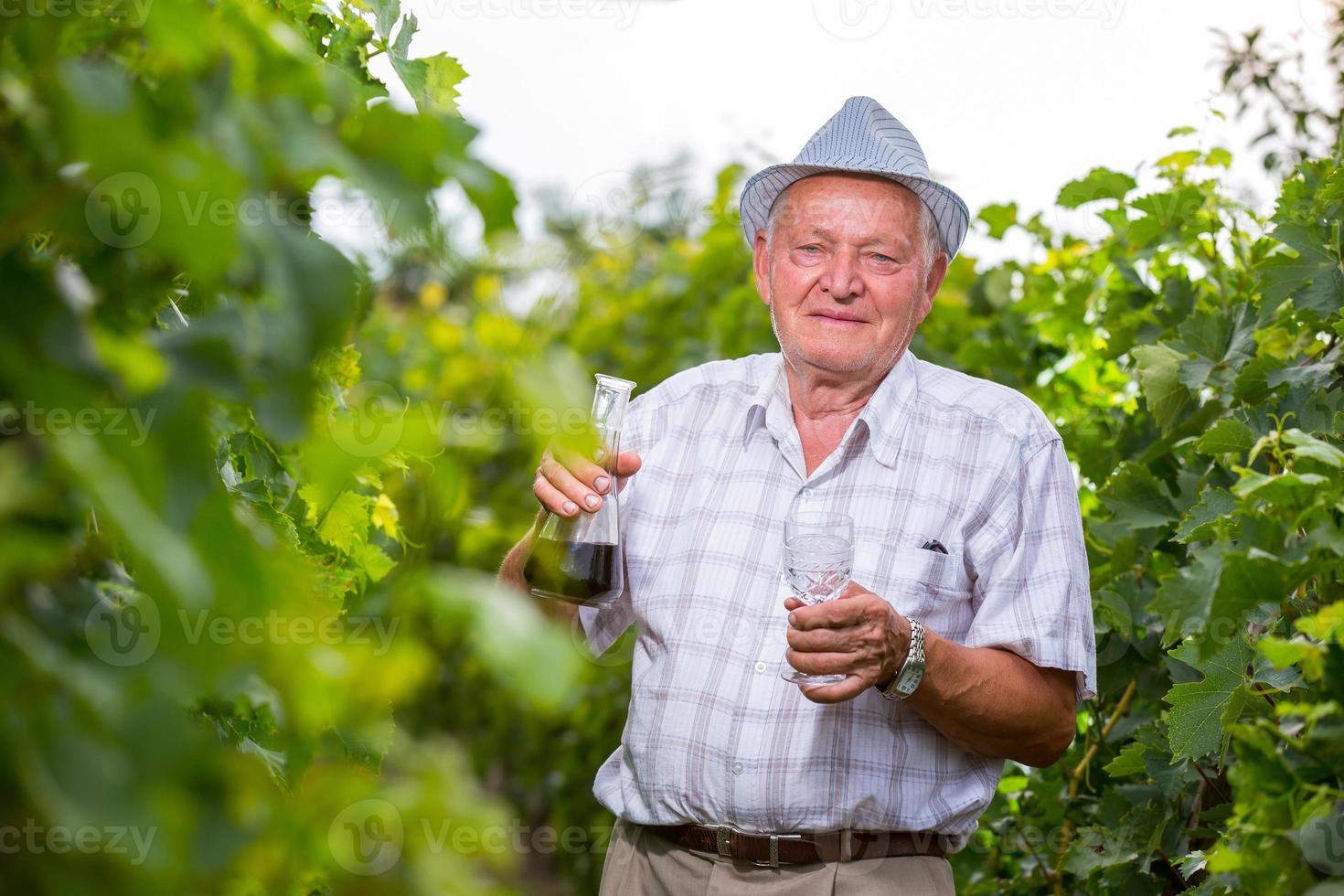 Senior viticulturist photo