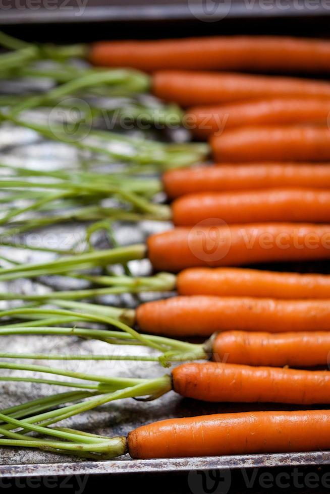 Carrots on Metal Sheet Horizontally with Stems photo