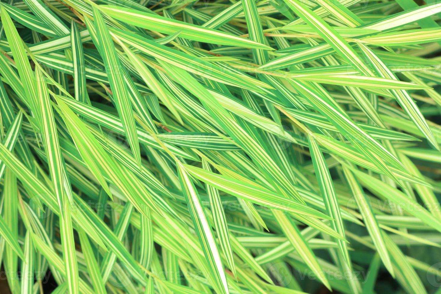árbol de bambú foto