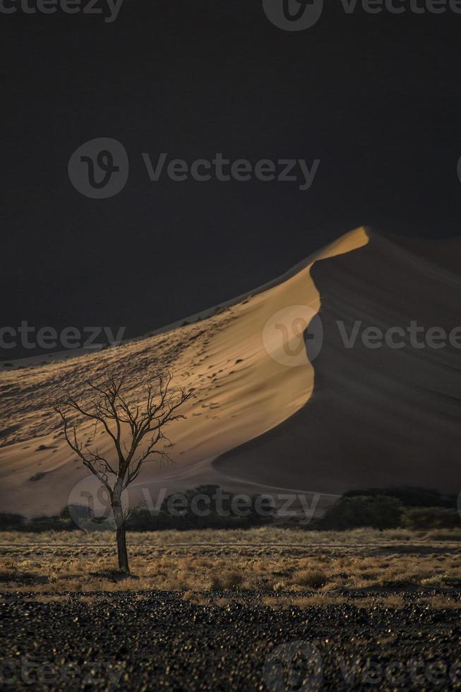 Slender tree photo