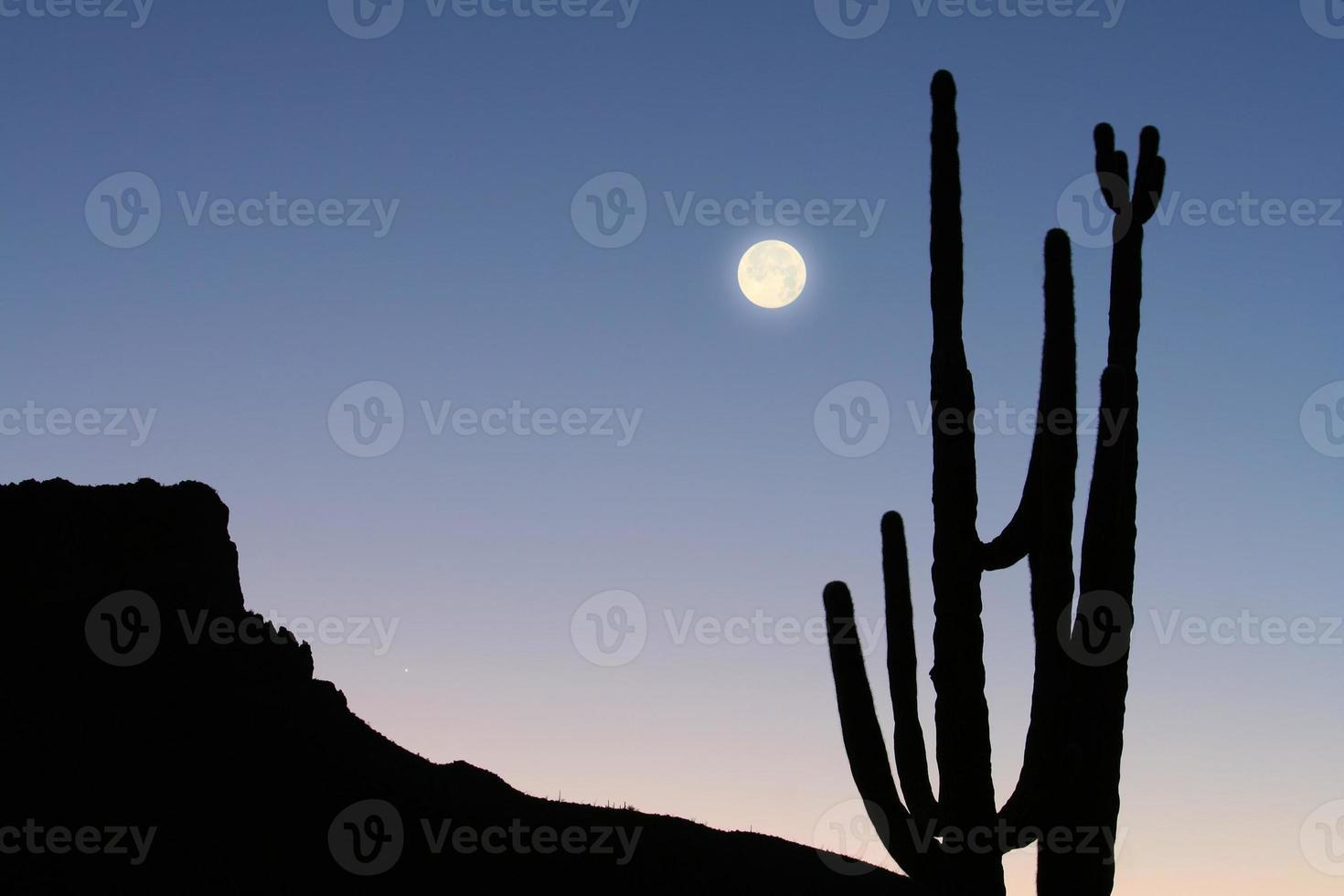 montaña, cactus y luna foto