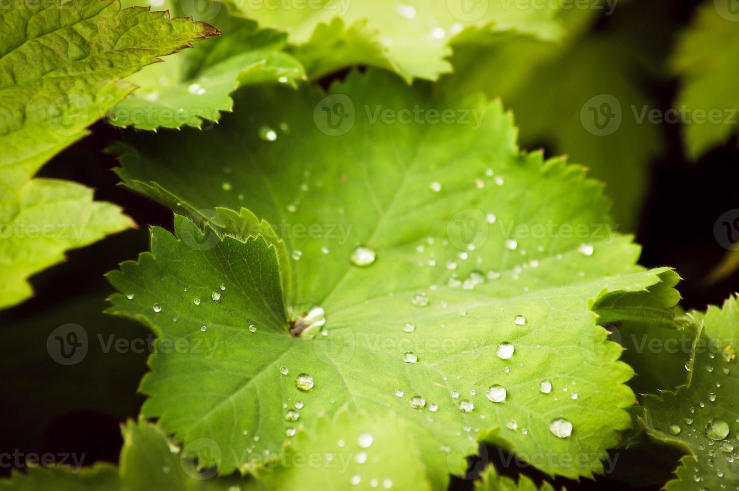 gotas de agua sobre la hoja verde foto