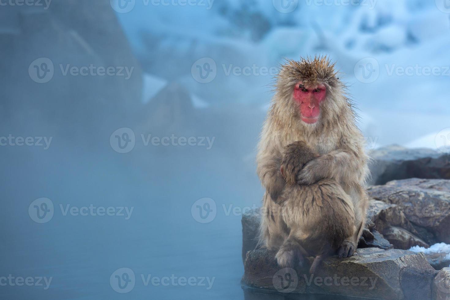 mono de nieve macaco onsen foto