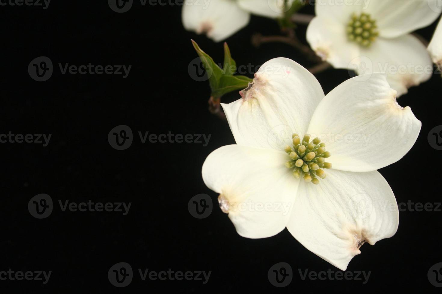 Spring favorite photo