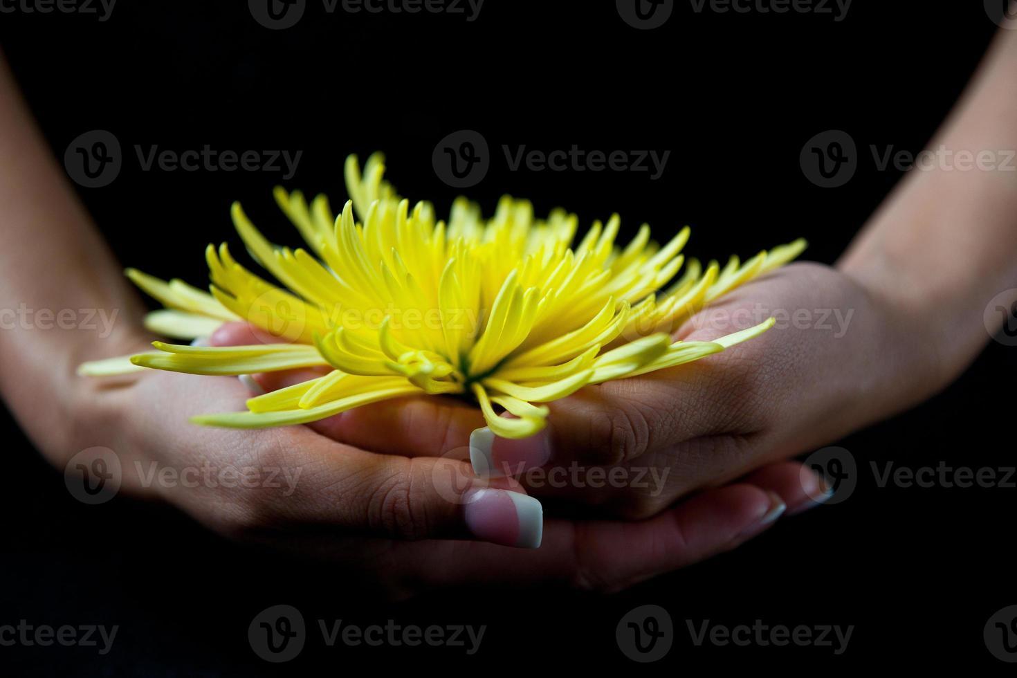 Vista frontal de la mujer con crisantemo amarillo foto