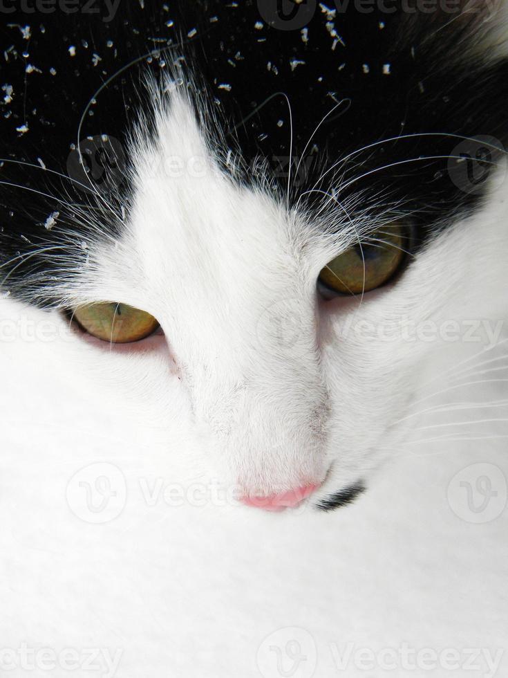 gato de invierno foto
