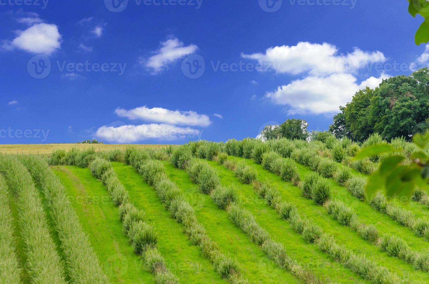 linha de plantas no viveiro foto