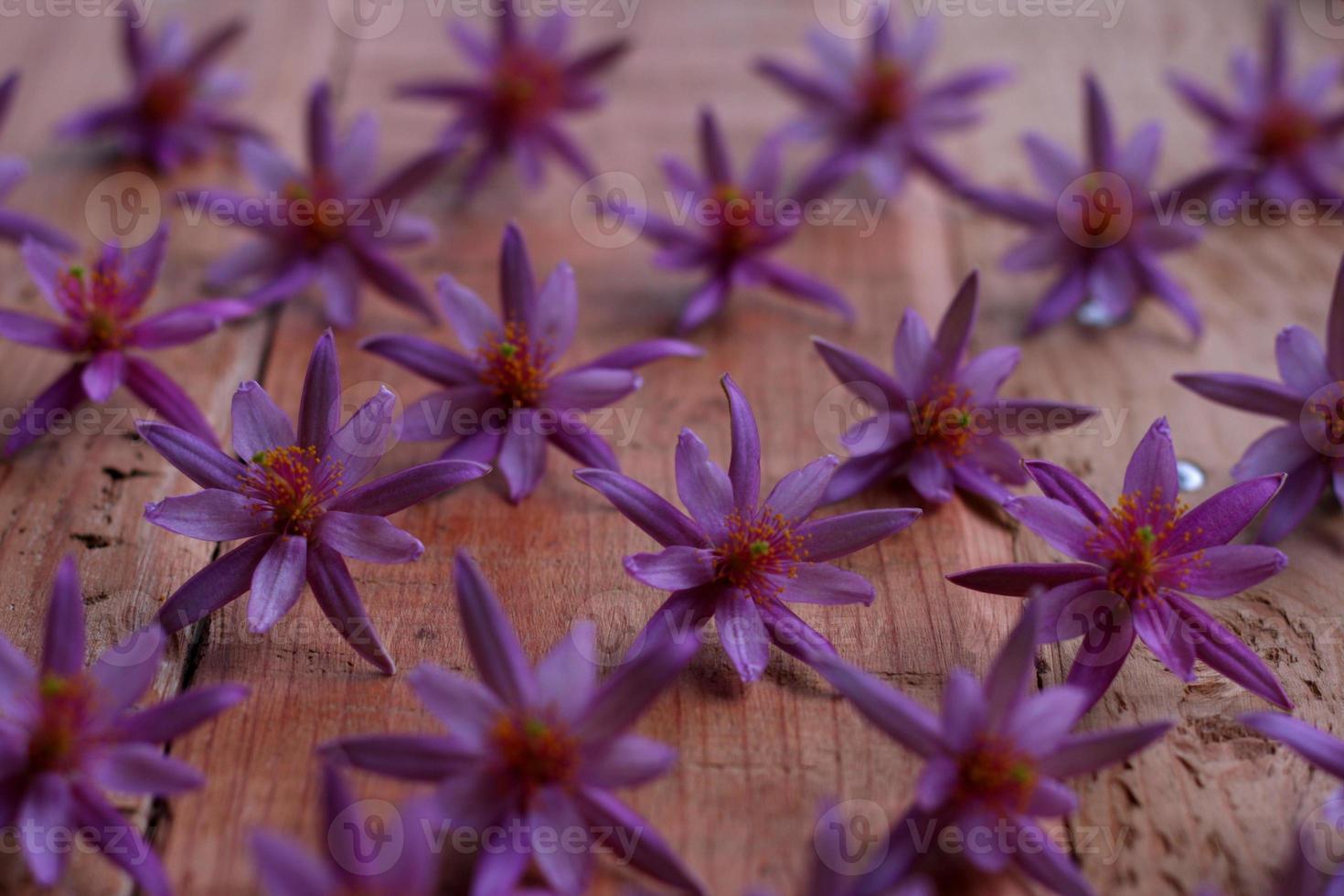 Grupo de flores de color rosa en el patrón de fila foto