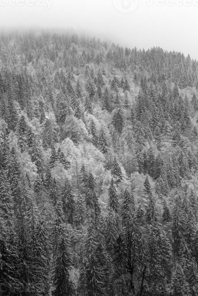 forêt noire d'hiver photo