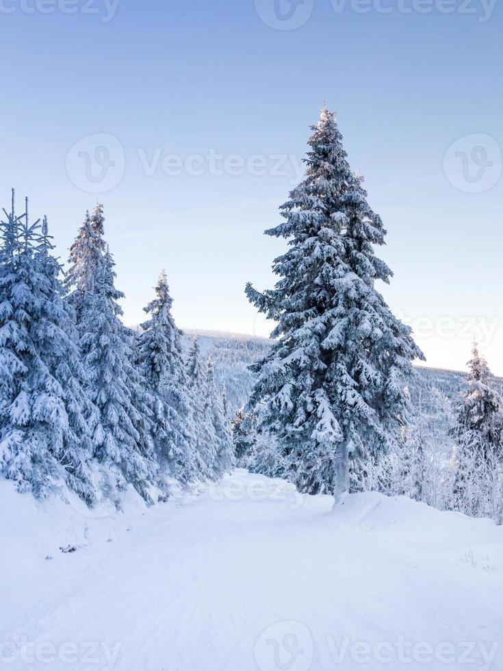 invierno en las montañas foto