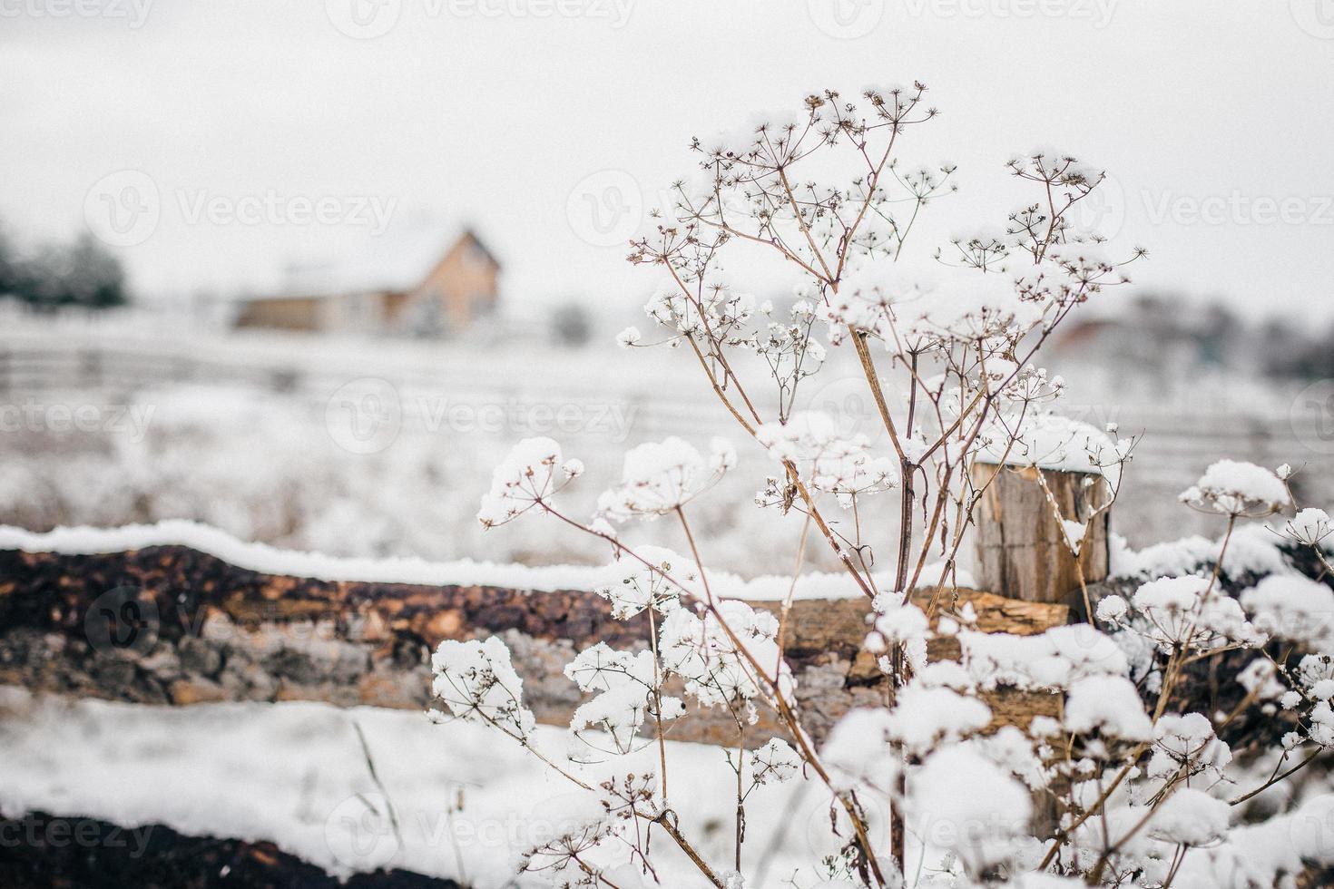 Winter in a village photo