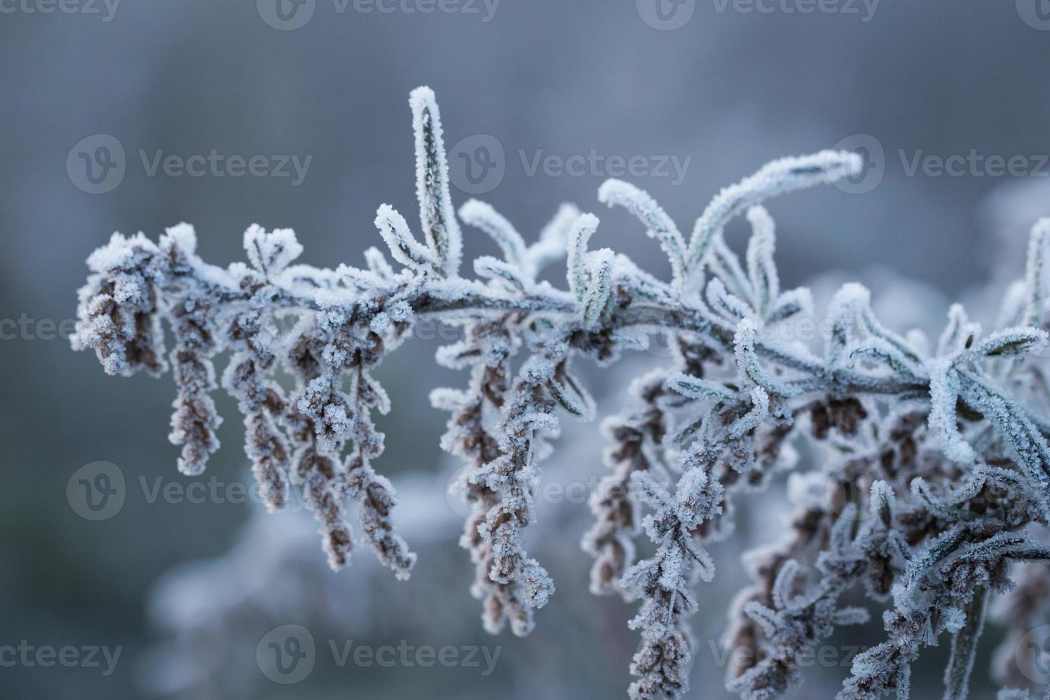 bevroren winter foto