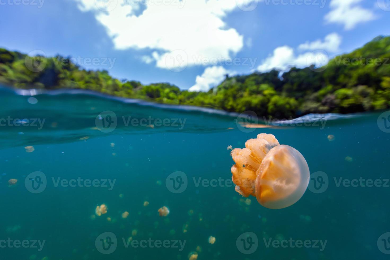 lago de medusas foto