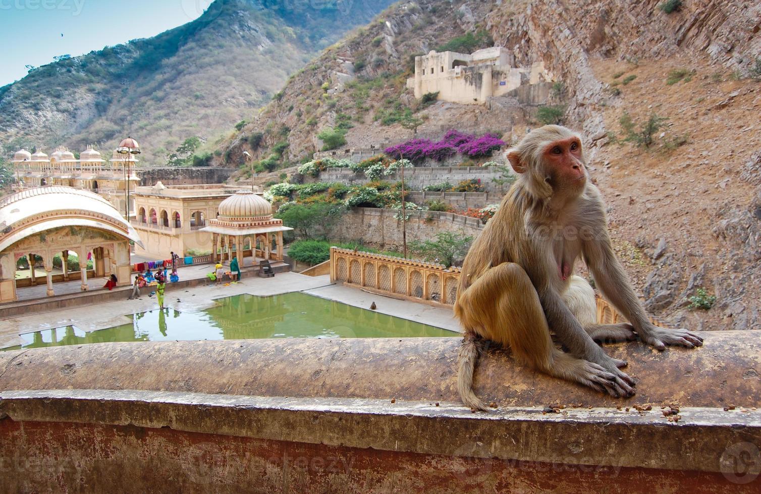 Templo de los monos cerca de Jaipur, India. foto