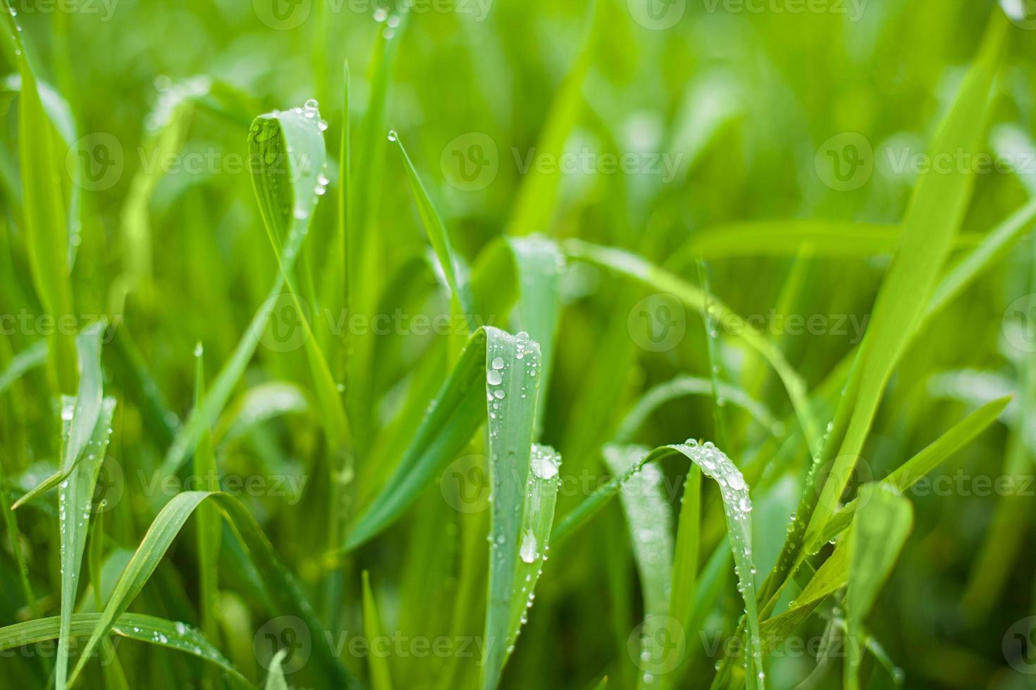foto de hierba verde fresca