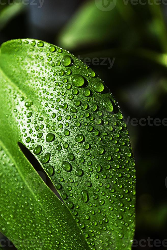 Water drop on leaf photo