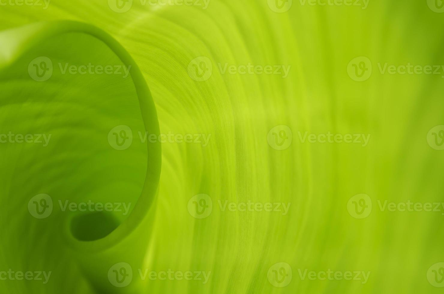 patrón en hojas de plátano foto