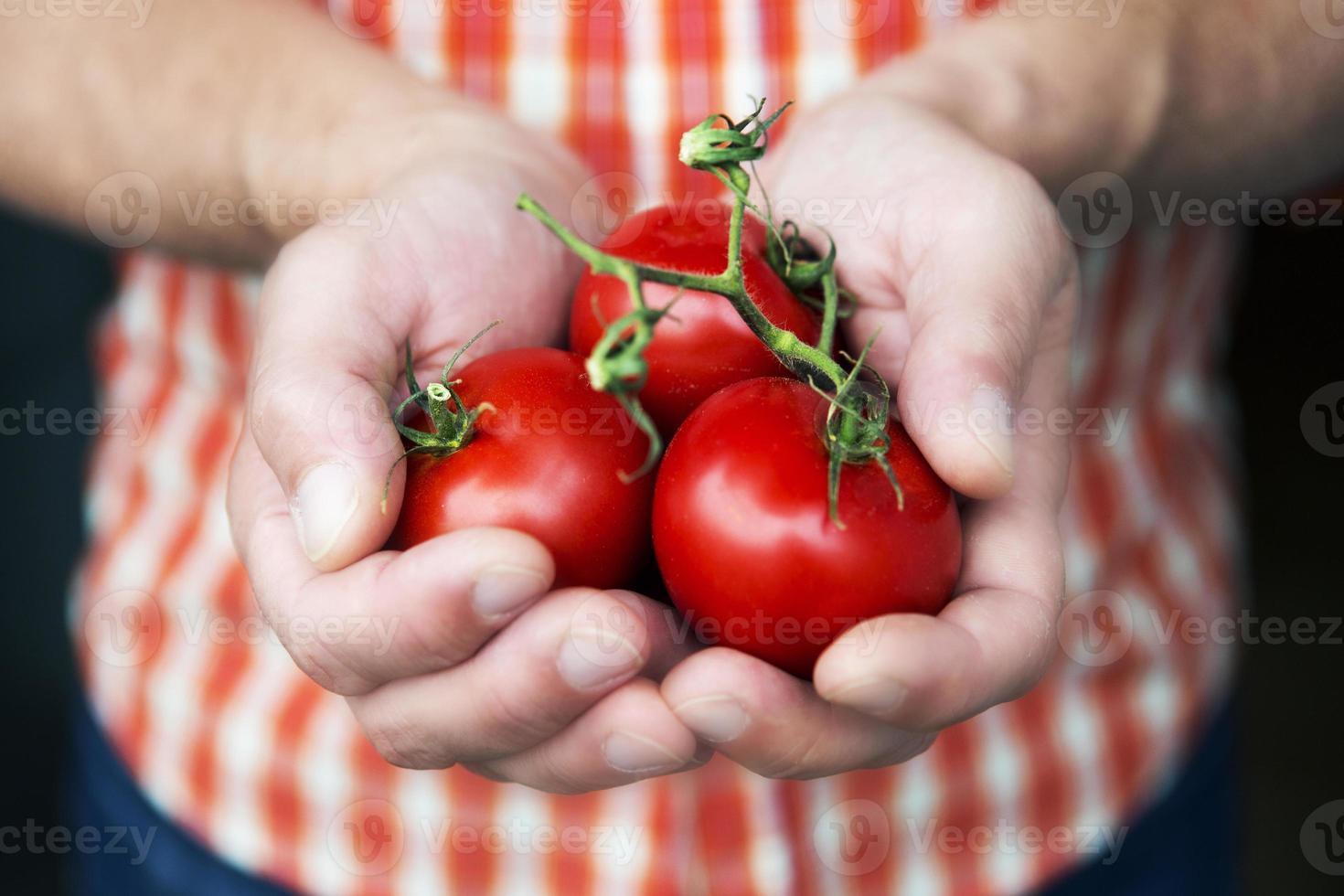 Handvoll Tomaten foto
