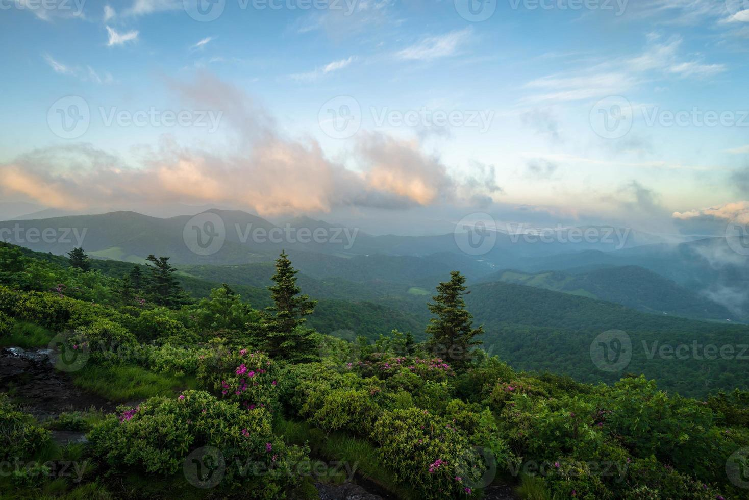 Roan Mountain Spring Rhododenron Blooms 3 photo