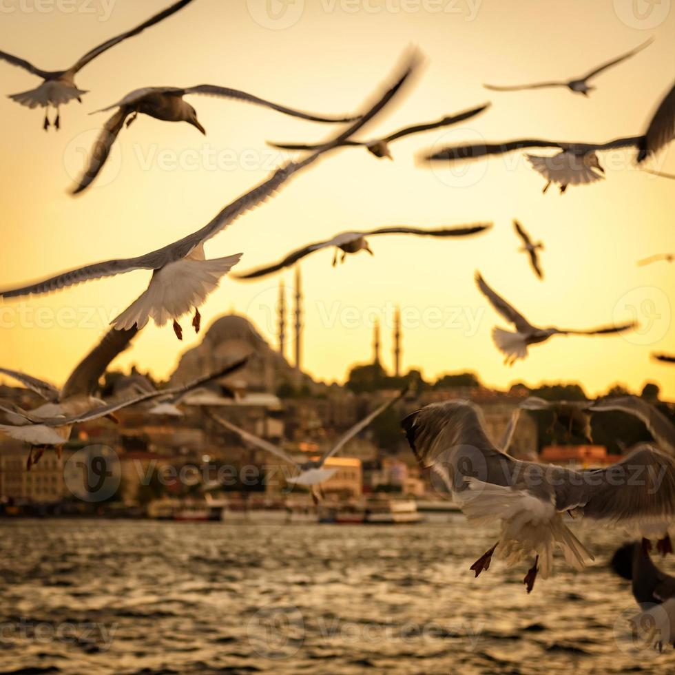 Seagulls over the Golden Horn in Istanbul at sunset photo