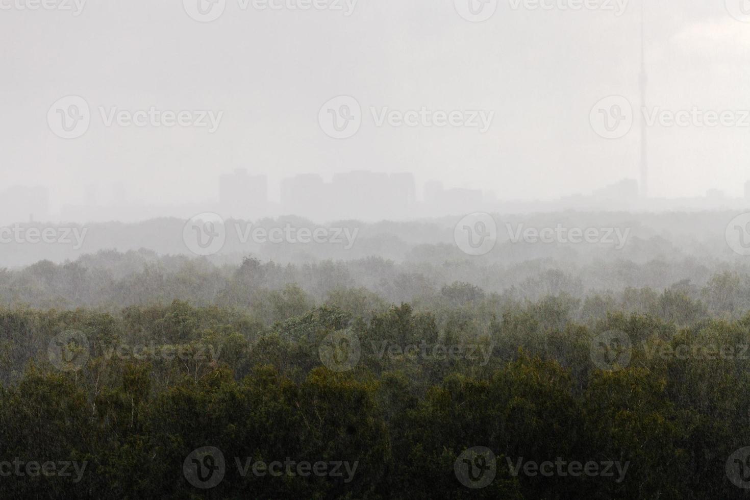heavy fall of rain in summer day photo