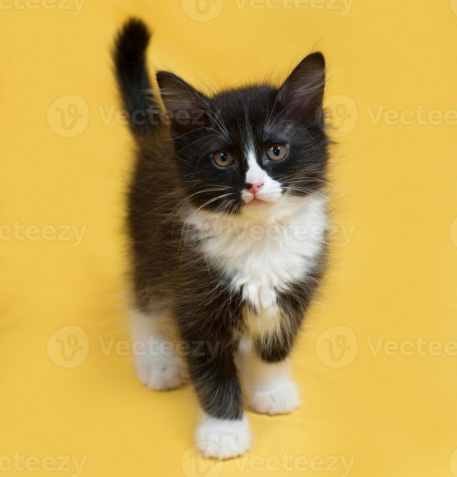 Small fluffy black and white kitten standing on yellow photo