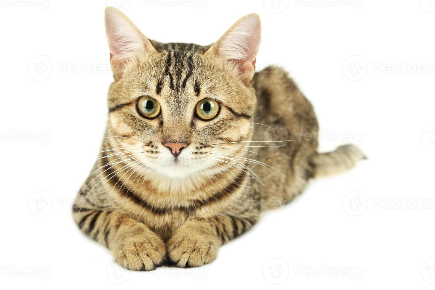 Beautiful cat on white background photo