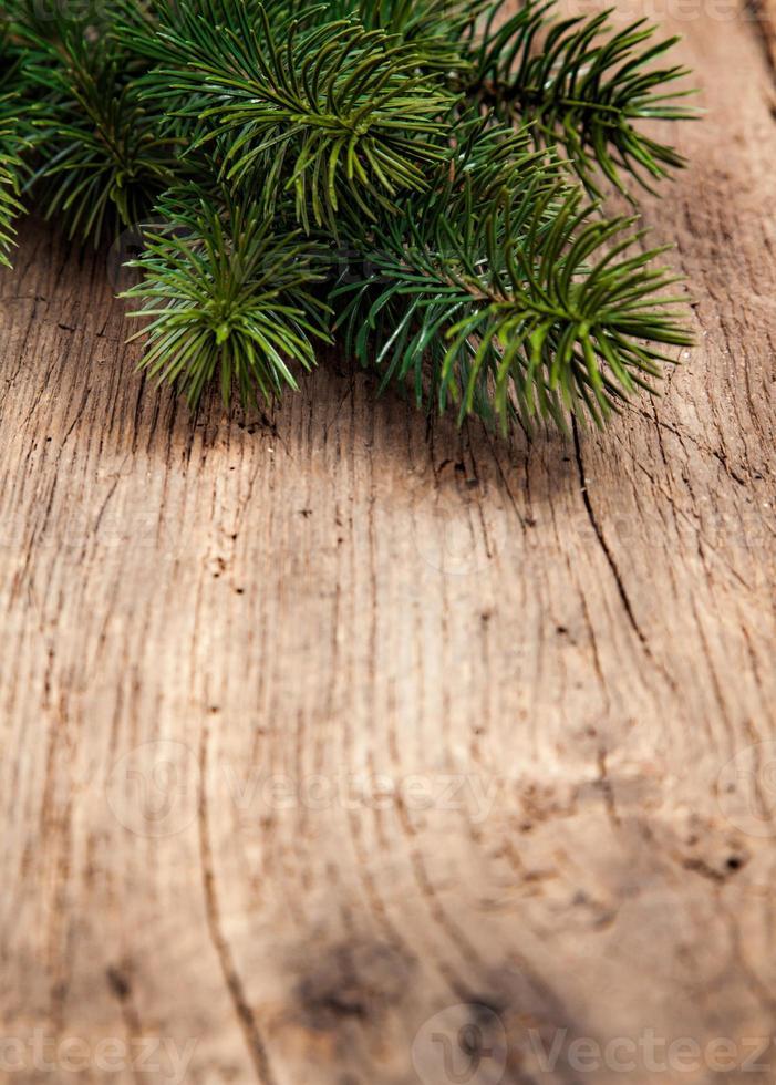 ramitas de árboles de hoja perenne utilizados como decoración foto