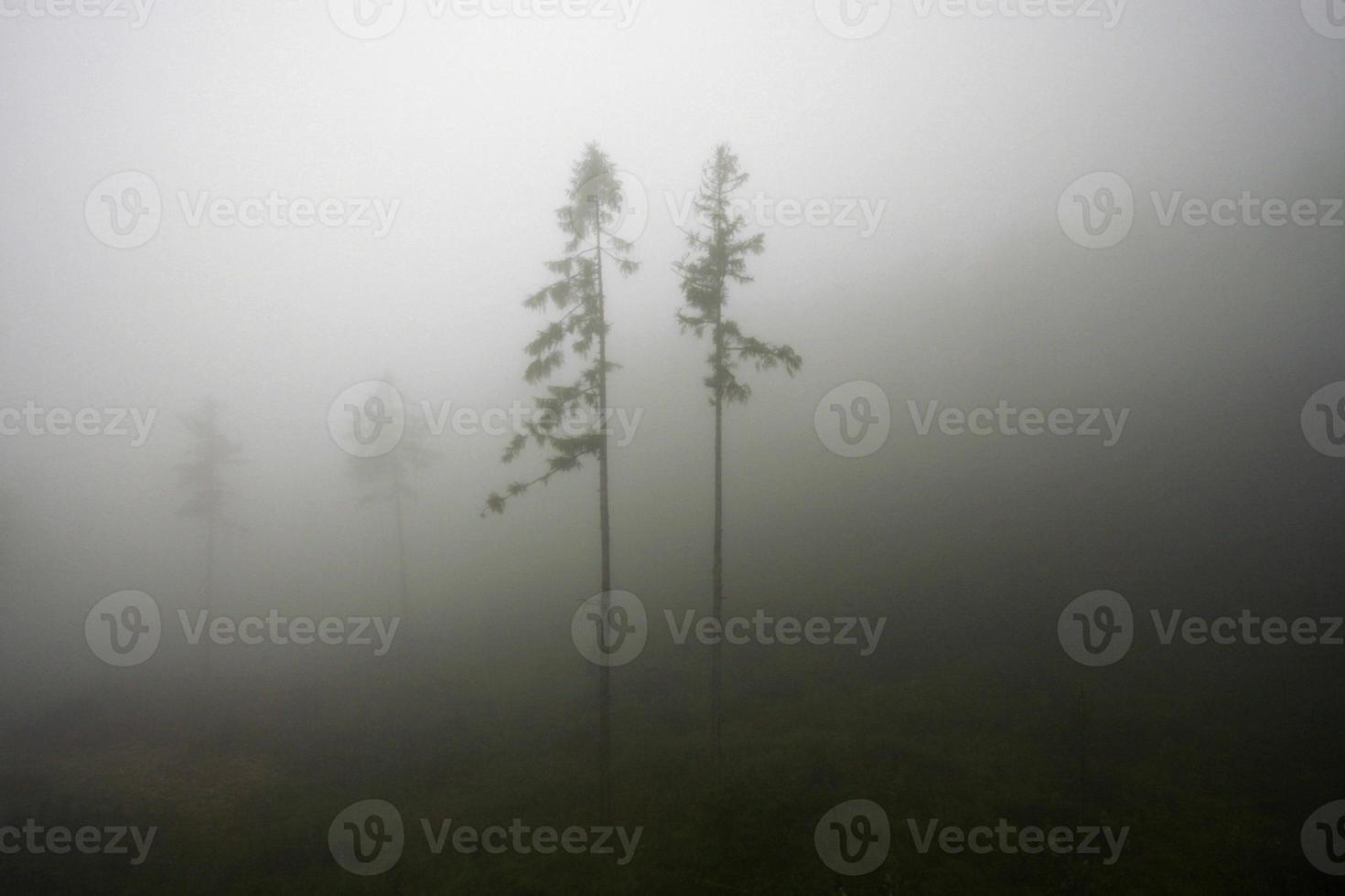 árboles en la niebla foto