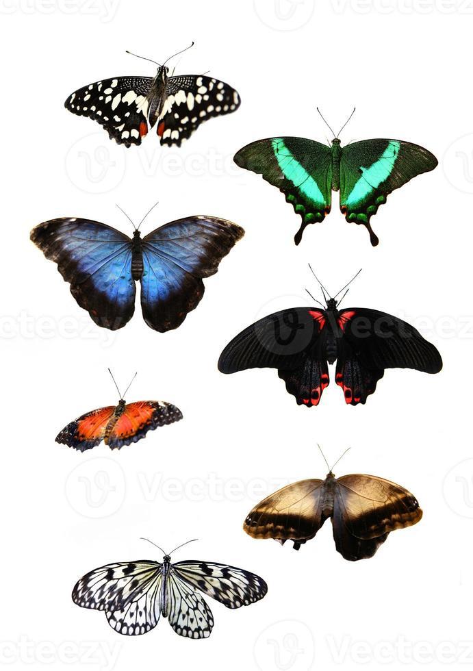 Beautiful tropical butterflies photo