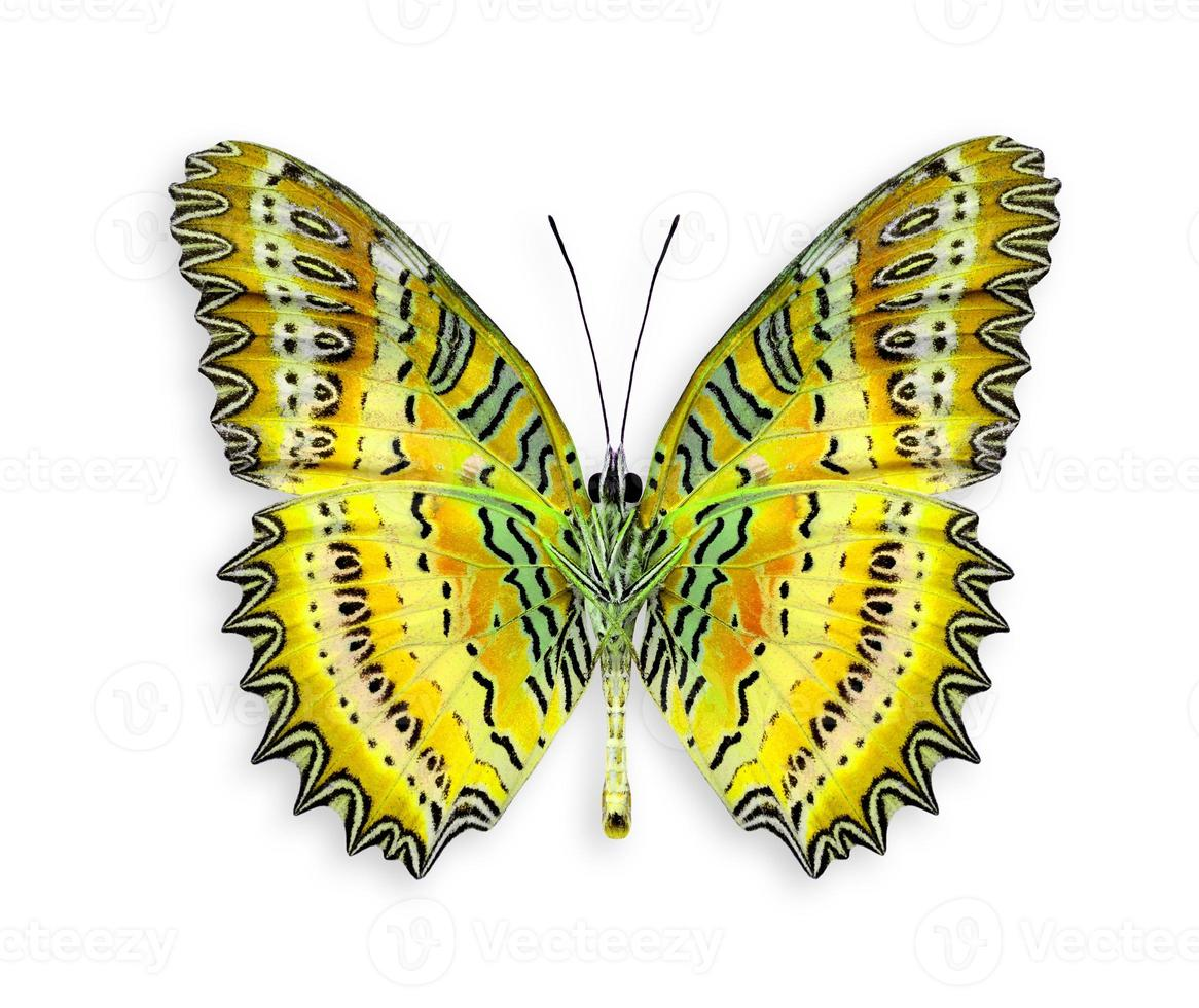 Gran mariposa verde en color elegante aislado sobre fondo blanco. foto